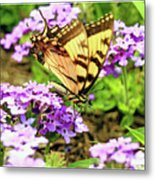 Yellow Eastern Tiger Swallowtail Series Metal Print