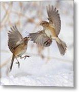 American Tree Sparrows Metal Print