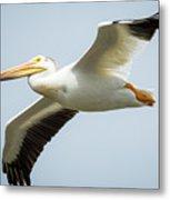 American White Pelican Flyby  Metal Print