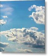 American White Pelicans Flying Metal Print