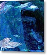 Amidst Dolphins Metal Print