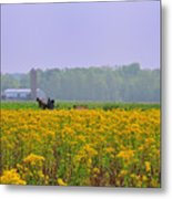 Amish Buggy And Yellow Field Metal Print