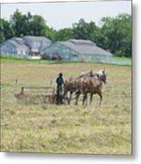 Amish Girl Raking Hay As Painting Metal Print