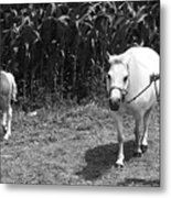 Amish Girl With Her Colt Metal Print