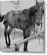 Amish Horse Metal Print