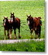 Amish Horse Team Metal Print