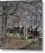 Amish Horses In Harness Metal Print