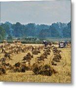 Amish Making Grain Shocks Metal Print