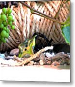 Among Ropes And Grapes Metal Print
