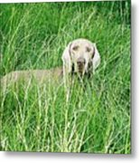 Among The Grasses Metal Print
