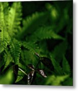 Amongst The Fern Metal Print