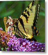 Amorous Butterfly And Faerie Metal Print