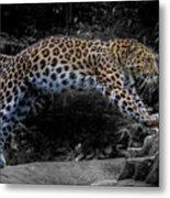 Amur Leopard On The Hunt Metal Print