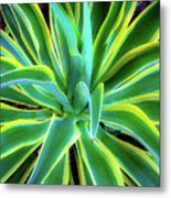 An Agave In Color  Metal Print