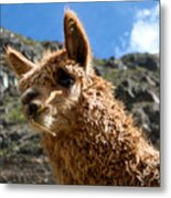 An Andean Icon Metal Print