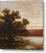 An Australian Mangrove. Ebb Tide Metal Print