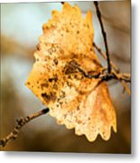 An Autumn Leaf Suspended Metal Print