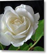 An English Rose Metal Print