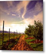 An Evening By The Orchard Metal Print