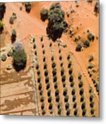 An Olive Grove Between The Succulent Metal Print