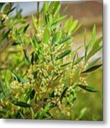 An Olive Tree Metal Print