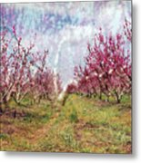 An Orchard In Blossom In The Golan Heights Metal Print