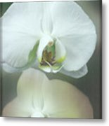An Orchid For You Metal Print