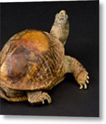 An Ornate Box Turtle With A Fiberglass Metal Print