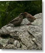 An Unmatched Pair Metal Print