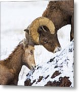 An Uphill Battle Metal Print