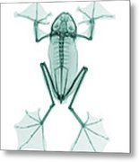 An X-ray Of A Flying Frog Metal Print