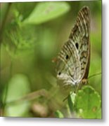 Anartia Butterfly In Wonderland  Metal Print