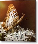 Anartia Jatrophae - White Peacock Butterfly  Metal Print