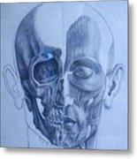 Anatomy Metal Print