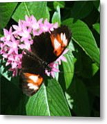 Anchored Down - Butterfly Metal Print