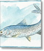 Anchovy Metal Print
