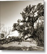 Ancient Live Oak Tree Metal Print