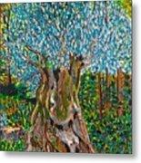 Ancient Olive Tree Metal Print