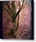 Ancient Tree By A Stream Metal Print