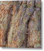 Ancient Tree Skin Metal Print