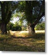 Ancient Willows #1 Metal Print