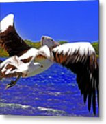 And The Seagull Follows Pelican Metal Print