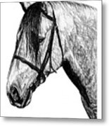 Andalusian Horse Metal Print