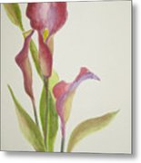 Andy's Calla Lillies Metal Print