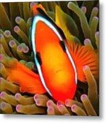 Anemone Fish Metal Print