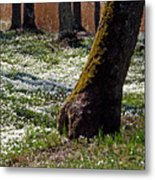 Anemone Forest Metal Print