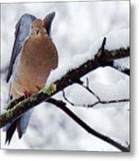 Angel Mourning Dove Metal Print