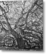 Angel Oak II Metal Print