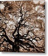 Angel Oak Johns Island Sc Metal Print