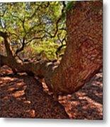 Angel Oak Tree 003 Metal Print
